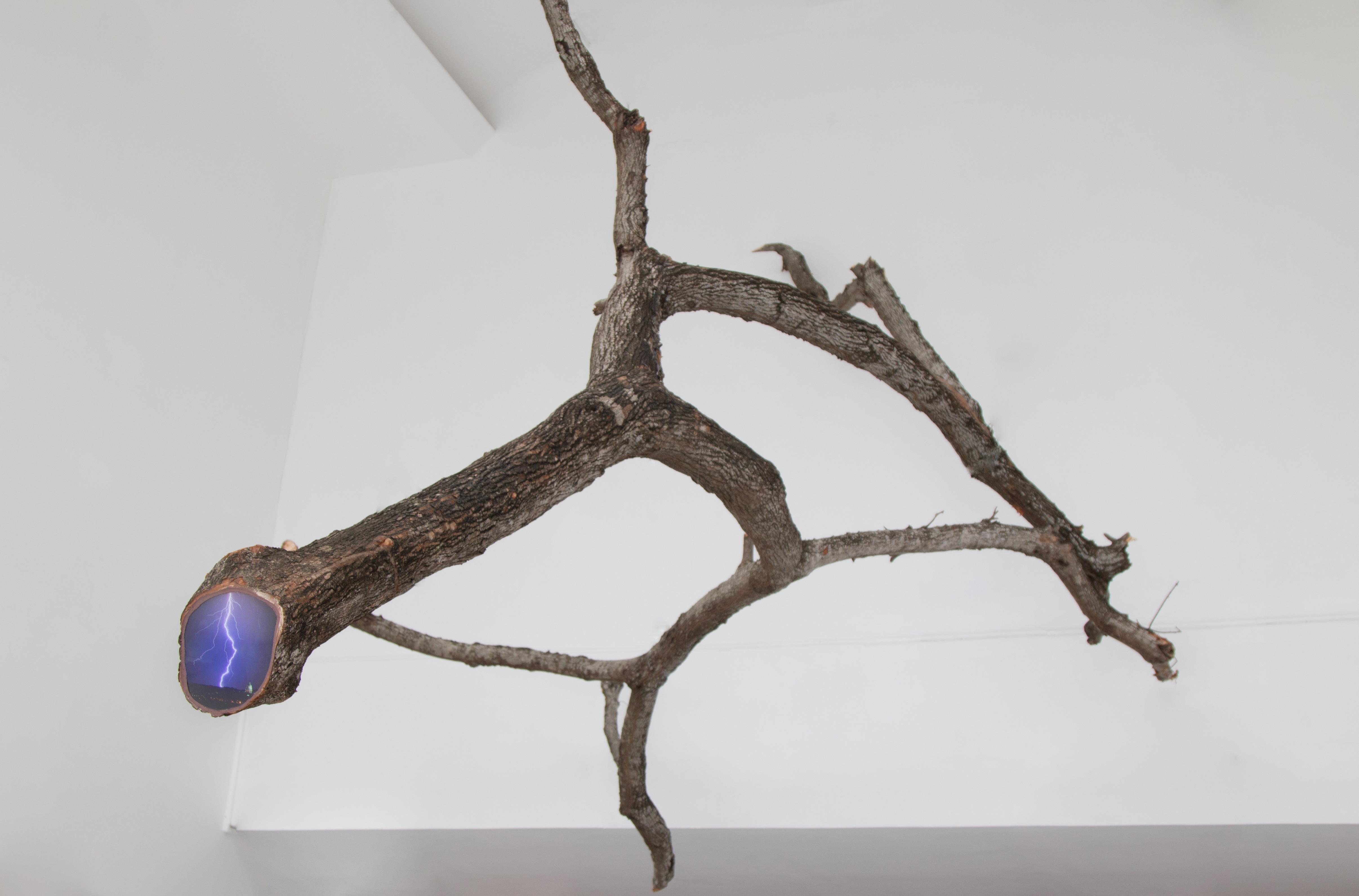 Eco #23, Rayo sobre Washington DC - Rama de árbol caído en Ciudad de Panamá, 2019